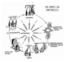 AgriImpol-un-anno-da-pipistrello