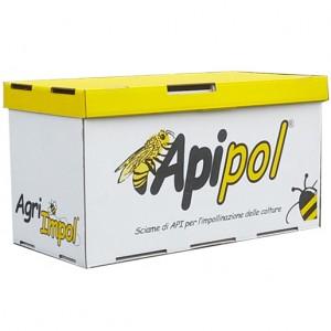 apipol_1